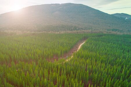 Aerial view of sunset over pine trees forest and large hill in Melbourne, Australia