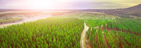 Sunset over pine trees plantation in Melbourne, Australia - aerial panorama