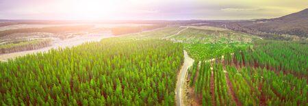 Sunset over pine trees plantation in Melbourne, Australia - aerial panorama Stockfoto - 128283346