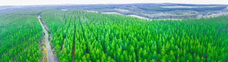 Rural road passing through pine trees forest in Melbourne, Australia - wide aerial panorama