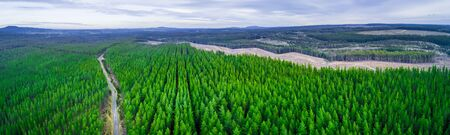 Wide aerial panorama of road passing through pine trees plantation in Australia Foto de archivo - 128283372