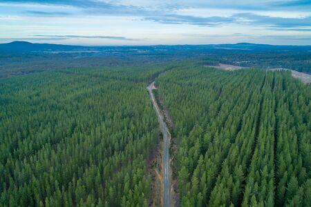 Aerial view of rural road passing through pine trees plantation at Mt. Macedon, Victoria, Australia