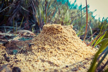 Extreme closeup anthill in Australia with shallow focus