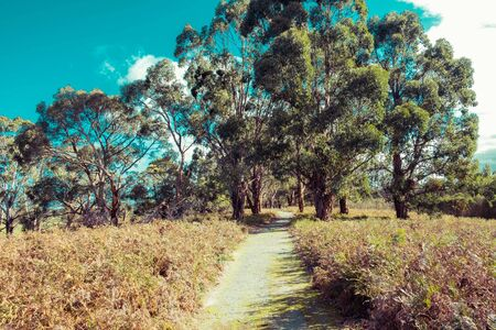 Walking track passing through native Australian bush on bright sunny day Stockfoto - 128283429