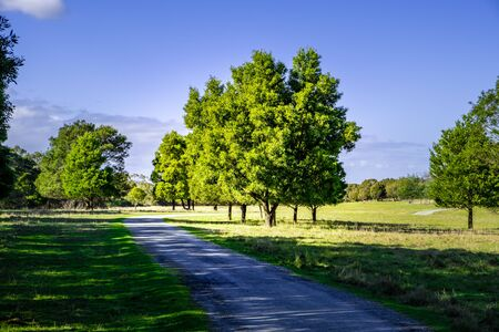 Beautiful trees and green grass in Cranbourne, Victoria, Australia 写真素材