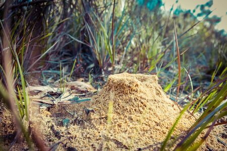 Closeup view of an anthill in Australia with shallow focus Stockfoto - 128283448