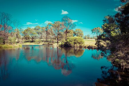 Trees and bushes reflecting in a beautiful pond on bright sunny day Stockfoto