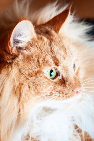 Ginger cat looking into the light - side view Stockfoto - 128283517