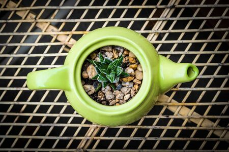 Looking down at small succulent plant growing out of green decorative teapot