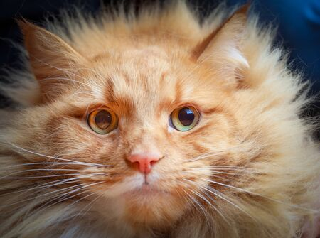 Serioius ginger cat with wide open eyes portrait Stockfoto - 128283544
