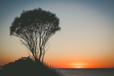 Sunset over ocean with coastline vegetation silhouette and copy space