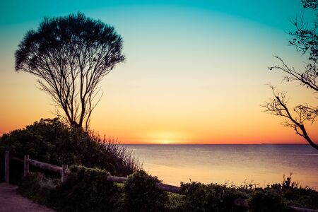 Coastline shrub silhouettes at sunset over ocean Stock Photo