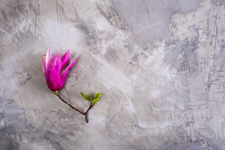 Beautiful magnolia flower on concrete surface - top view with copy space