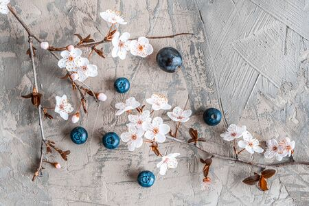 Beautiful sakura blossom with blueberries on concrete - top view