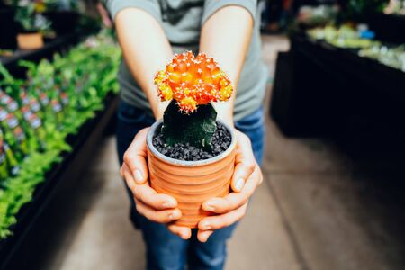 Female hands holding red cactus in a nursery Banco de Imagens