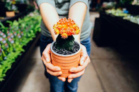 Female hands holding red cactus in a nursery Zdjęcie Seryjne