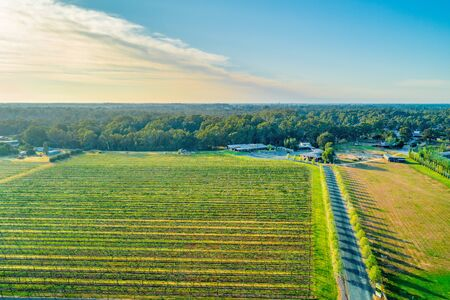 Beautiful vineyard in spring. Moama, NSW, Australia