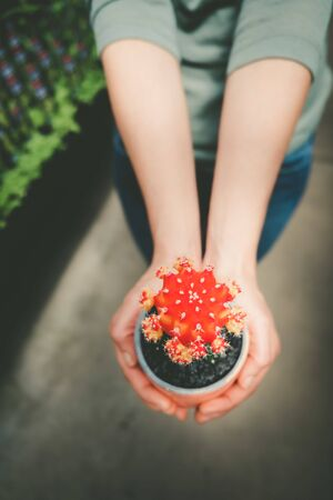 Female hands holding decorative small red cactus in a pot on blurred background Stockfoto