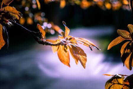 Beautiful orange autumn leaves on a tree with shallow focus Stockfoto
