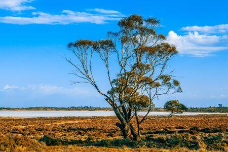 Tree growing near salt lake Crosbie in Murray-Sunset National Park, Australia Stock Photo