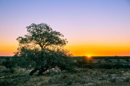Australian desert at sunset with copy space Stockfoto