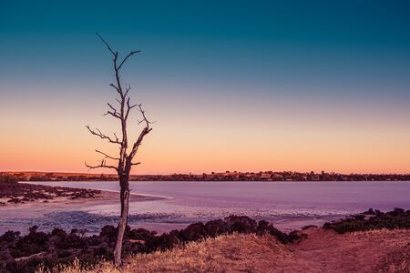 Bare tree against pink salt lake at sunset in Australia