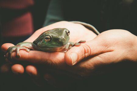 Female hands holding smiling green tree frog Stockfoto