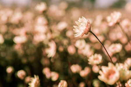 Beautiful flower in the field with shallow focus 스톡 콘텐츠