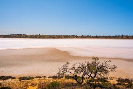 Shrubs growing on shores of salt lake in Australian desert Banque d'images
