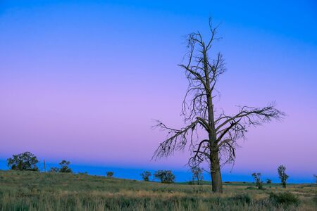 Beautiful bare tree in the desert at dusk