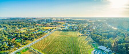 Aerial panoramic landsccape of vineyard and scenic countryside in Moama, NSW, Australia