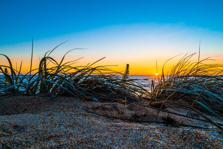 Sunset over ocean with beach grass on the foreground. Copy space in the sky