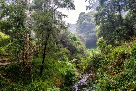 Beautiful greenery over sweetwater creek in Frankston, Victoria, Australia 版權商用圖片 - 138380387