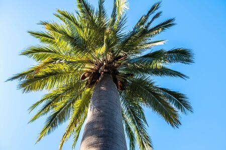 Looking up at beautiful palm tree top