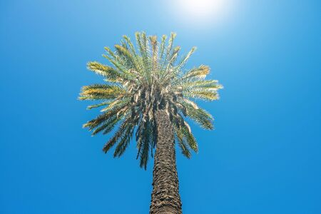 Tall palm tree against bright sun and blue sky