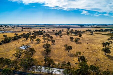 Aerial view of yellow pastures in Australian outback in bright daylight
