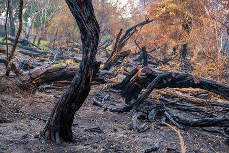 Burned tree trunks and vegetation in Australia Stock Photo