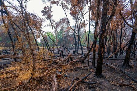 Burned trees and shrubs after forest fire Reklamní fotografie