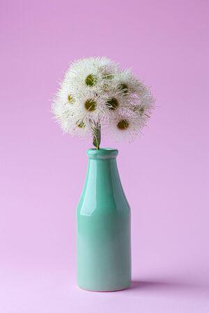 Eucalyptus flowers in green bottle on pink background