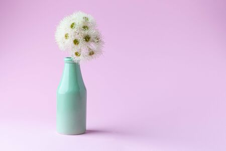 White eucalyptus flowers in simple green vase on pink background with copy space