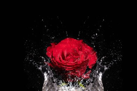 Red rose flower splashes into water against black background