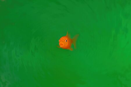 Goldfish in vivid green water with round ripples and copy space