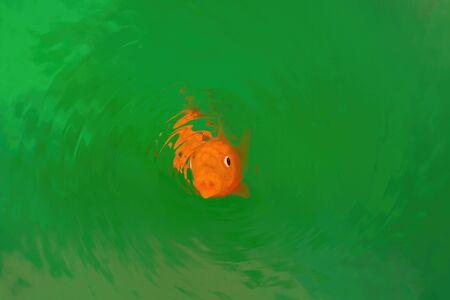 Goldfish making round ripples in vivid green water with text space