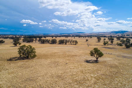 Yellow grasslands with scattered trees and rolling hills in the summer - aerial view