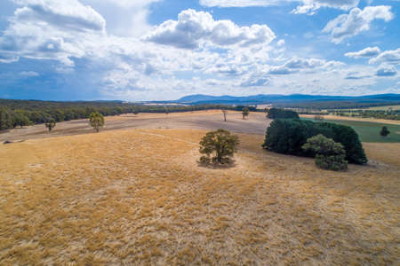 Scenic aerial view of yellow fields and trees with mountains on the horizon. Victoria, Australia