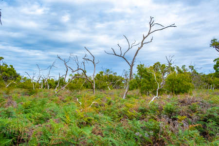 Bare trees sticking out from ferns - Australian Landscape