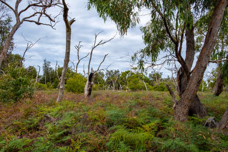Native Australian landscape on Raymond Island, Victoria, Australia