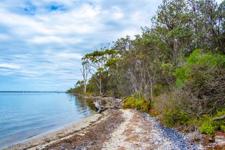Raymond Island coastal vegetation in Victoria, Australia 写真素材