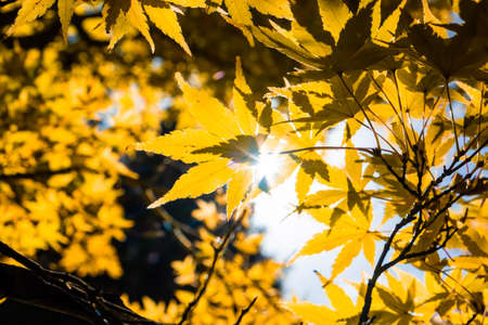 Sunshine with flare through fall leafs on blurred background