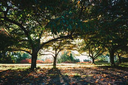 Sunset shining through beautiful trees in autumn Stock Photo